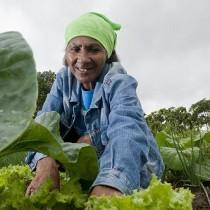 Feeding the Planet, Energy for Life